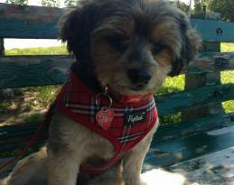"""Thanks to our friend Roger Marshall for giving up an update on sweet Sasha who he adopted from the RISPCA last October. Roger says she's such a happy dog and that she's """"my little girl"""" Thank you for adopting Roger! #AdoptDontShop"""
