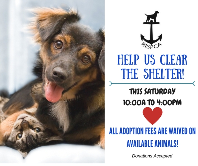 HELP US CLEAR THE SHELTER!